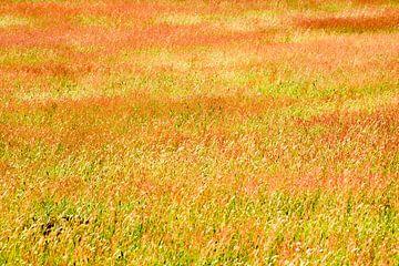 Feld in rot und gelb von René Wolters