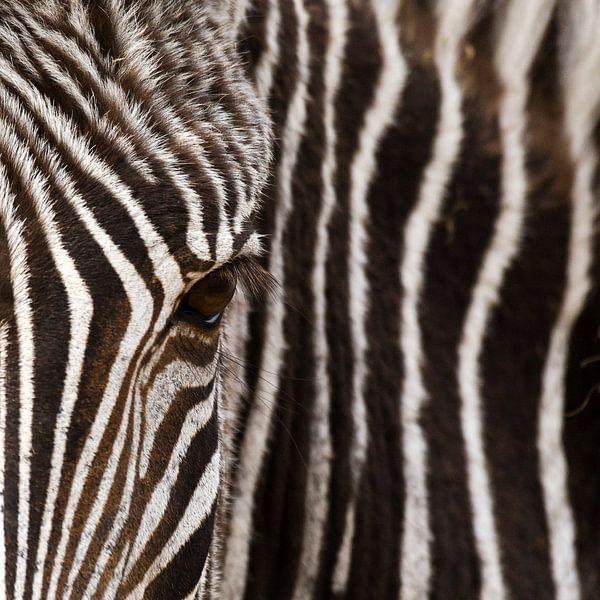 Oog in oog met de zebra van Sandra Kuijpers