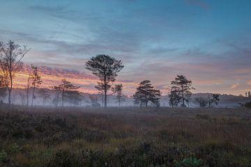 Limburgs hoogveen van Francois Debets
