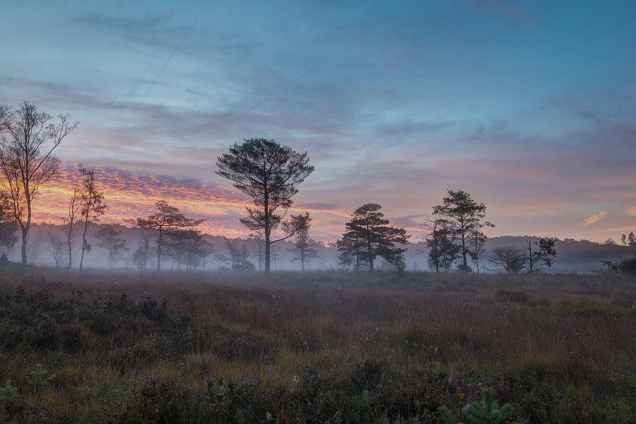 Limburgs hoogveen