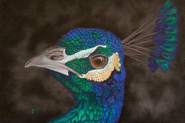 Porträt von Peacock von sabrina van lijsdonk