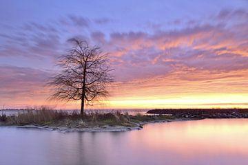 Alleenstaande boom aan het water van John Leeninga
