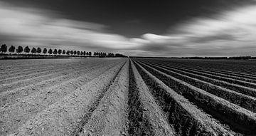 Aardappelruggen Noordoostpolder van Martien Hoogebeen Fotografie