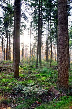 Zonneschijn in bos sur Maurice Ultee
