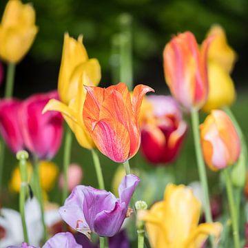 Veld vol met kleurige tulpen van Leontien van der Willik-de Jonge