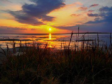 Waddenzee bij zonsondergang op het strand van Animaflora PicsStock