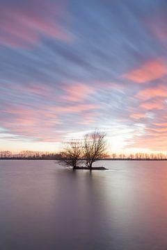 Solitaire boom in water van Elroy Spelbos