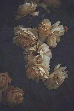 Gelbe Rosen von Marina de Wit