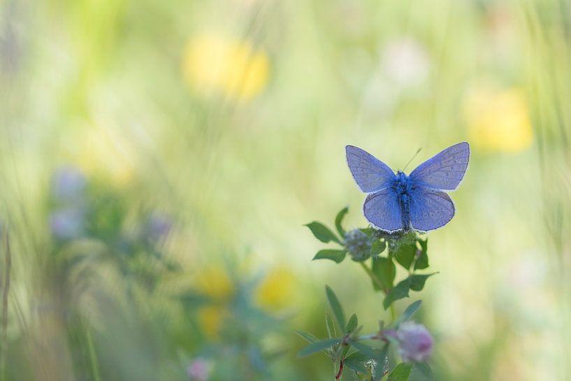 Blauwe vlinder van Teuni's Dreams of Reality