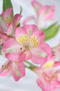 Nahaufnahme Blumenstrauß von Hannelore
