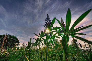 landschap bloemen / bloemenweide natuur van Johnny Flash
