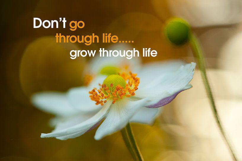 Quote: Don't go through life...  van Andrea Gulickx