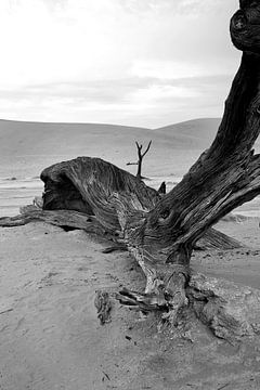 Dood hout in Deathvlei Namibië van