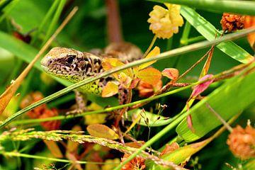 Salamander in het gras van