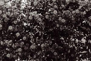 Bloemen van Myrthe Vlasveld