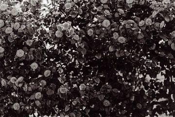 Blumen von Myrthe Vlasveld