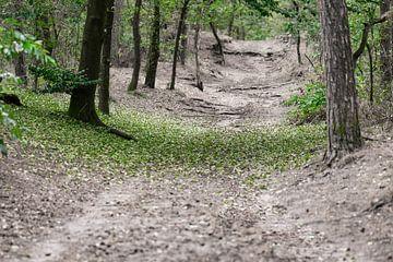 douche verte locale sur Tania Perneel