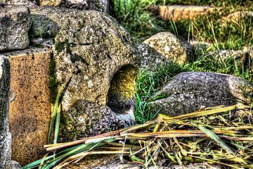 Messchenveld Assen von Quick Fotografie