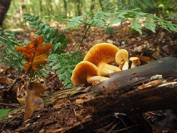 Paddestoelen in het bos van Marjanne van der Linden