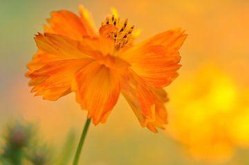 Warmes Orange V von Bianca Dekkers-van Uden