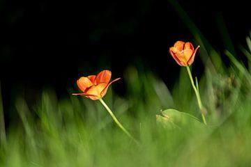 Flower von Tomas S.