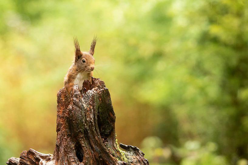 Écureuil curieux sur Gonnie van de Schans