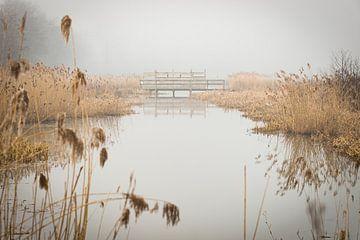 uitzicht op vijver op een mistige ochtend met winterkleuren van Ronenvief