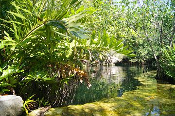 Cenote in de Yucatan van Jadzia Klimkiewicz