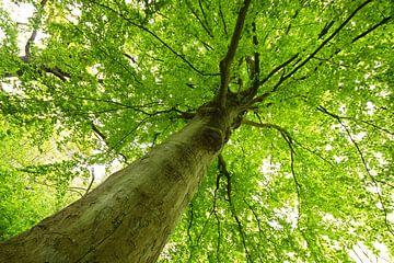magical tree van Dirk van Egmond