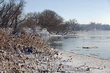 De Elbe bij Maagdenburg (Saksen-Anhalt) in de winter van t.ART