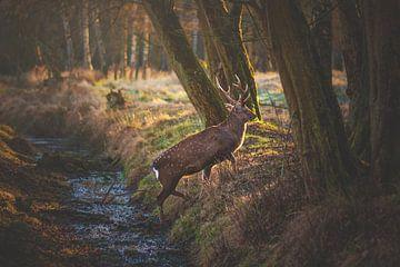 Herten verdwijnen in het bos van Florian Kunde