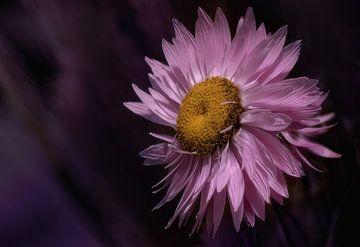 Macro roze bloem van Leon Brouwer