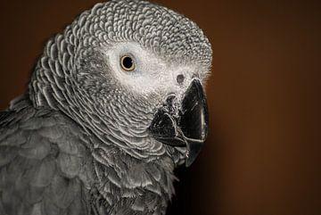 Portret van een grijze roodstaart van Saskia Cloo-Hartsema