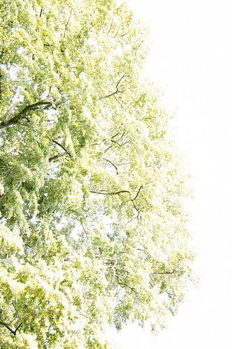 Bomen tegen hemel | Zacht groene kleuren
