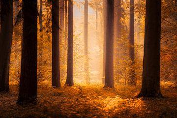 Herbst im Licht