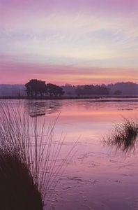 Strabrechtse Heide 169