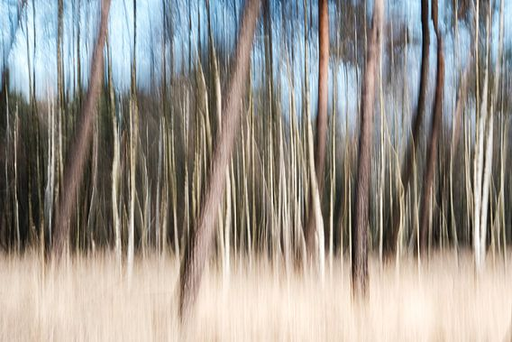 Het bos van Edwin van Wijk