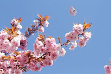 Japanse bloemenkers V van Anja Bagunk