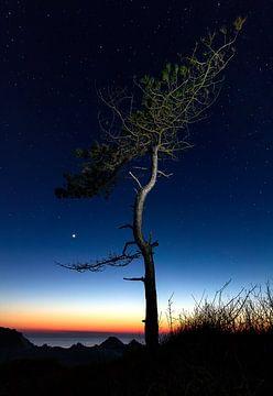Baum unter den Sternen von Nathan Marcusse