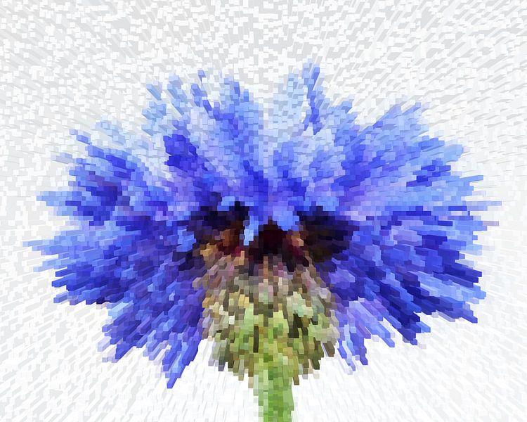 korenbloem II van Marion Tenbergen