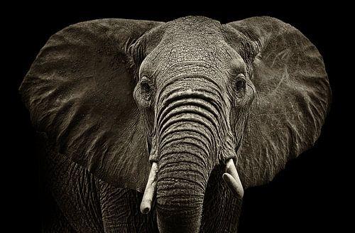 Elephant van Sasha Donker