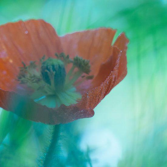 Papaver  van bird bee flower and tree