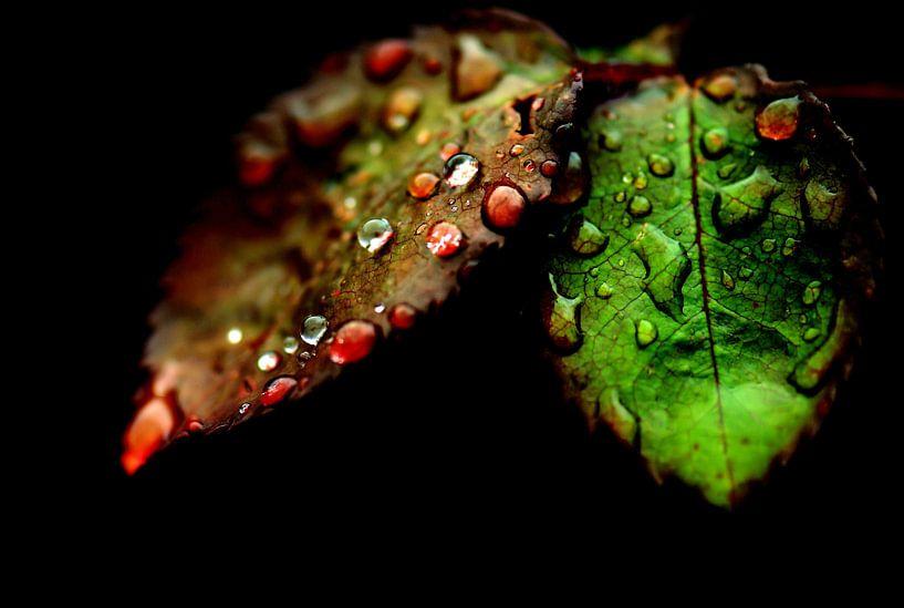 Rozenblaadjes van Paul Arentsen