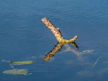 Stronk in het water van De Deelen gespiegeld van Harrie Muis