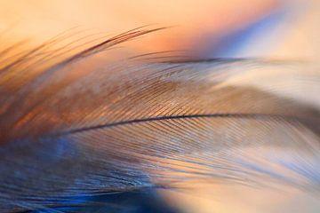 Fly away sur Carla Mesken-Dijkhoff