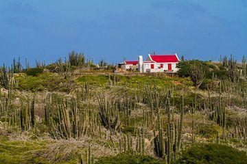 Zuilcactus landschap met oud Arubaans cunucu huis. van Ruurd van der Meulen