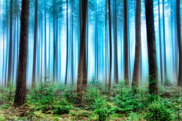 Forest 2.0 von Rigo Meens