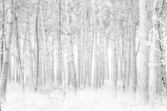 Herfst in Nederland van Brulin fotografie