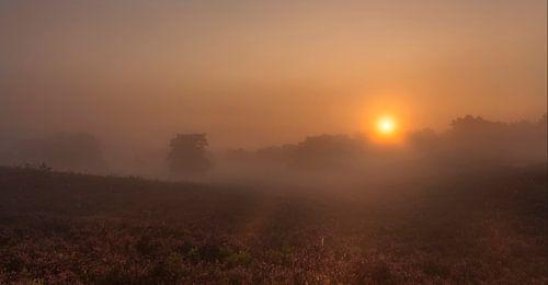 Mistige zonsopkomst op de Brunssummerheide