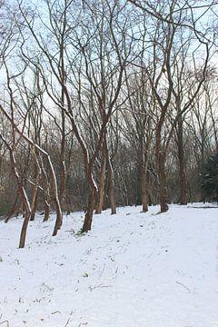 Winterwunderland 4 von Carin Klabbers
